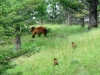 bear-and-cubs_0